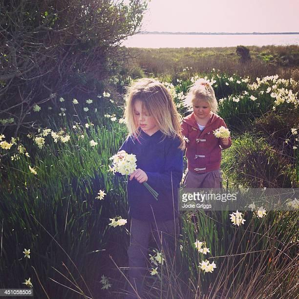 Children picking wild daffodil flowers
