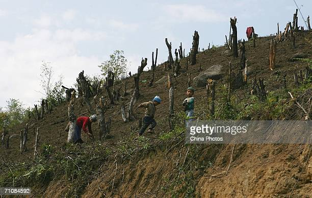 Children play as farmers cut firewood on a mountain where trees were burnt for land cultivation at a village on March 18 2006 in Panwa Kachin State...