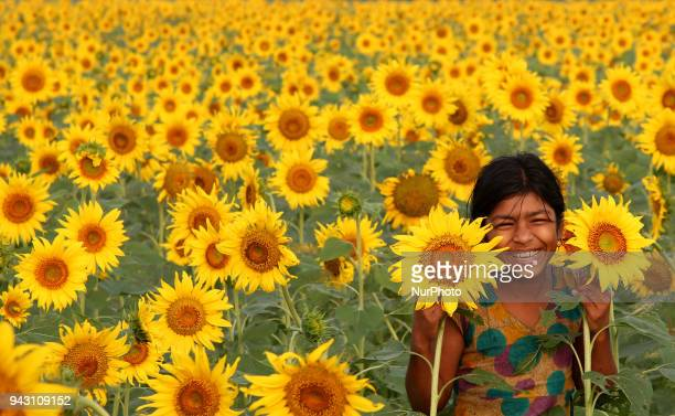 Children play in fields afire with blooming yellow sunflowers The photo was taken at an 18 acre field that cultivates sunflowers at Subarno Char in...