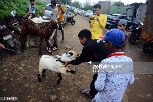 Children play with a goat which are being sold at Kondhwa livestock market ahead of Muslim festival Eid AlAdha on August 17 2018 in Pune India