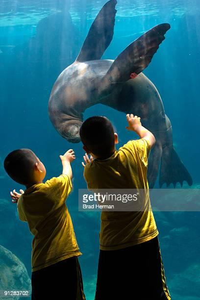 Children play with a sea lion at an Aquarium