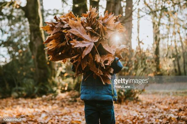 children playing in autumn leaves - four seasons stock pictures, royalty-free photos & images