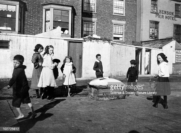 Children playing in the street near a crate with a fish on it North Yorkshire 1900s Photograph by Frank Meadow Sutcliffe Sutcliffe is best known for...