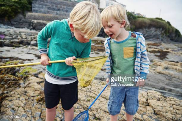 children playing on the beach - crab stock pictures, royalty-free photos & images