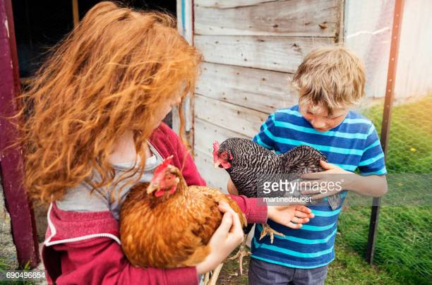 Children playing with hens in the family chicken coop.