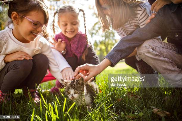 children playing with little cat - pet adoption stock pictures, royalty-free photos & images