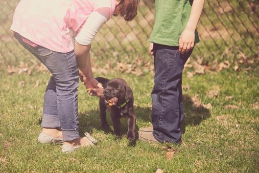 children playing with puppy - gettyimageskorea