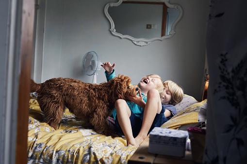Children playing with their pet dog - gettyimageskorea