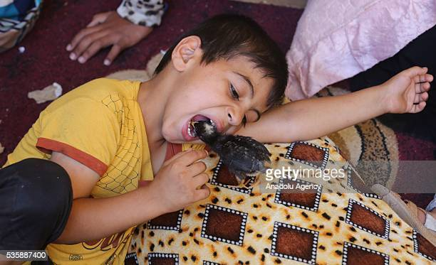 Children plays with a chick as Iraqi people in Fallujah town leave their home due to conflicts between Daesh and security forces in Anbar, Iraq on...