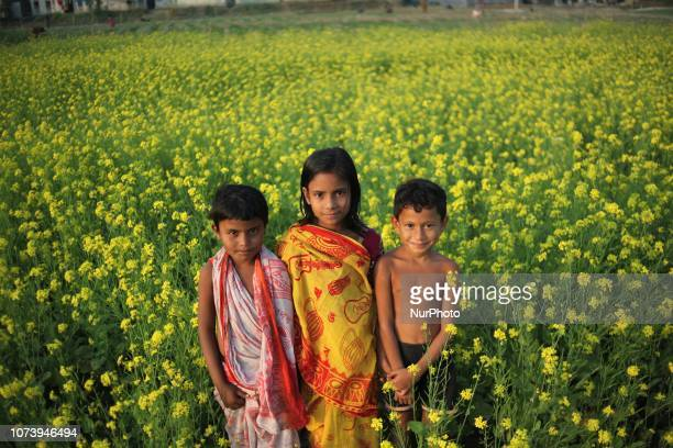 Children poses for a photo in a mustard field Photo has taken on Friday 14 December 2018 from Goalandaghat Bangladesh