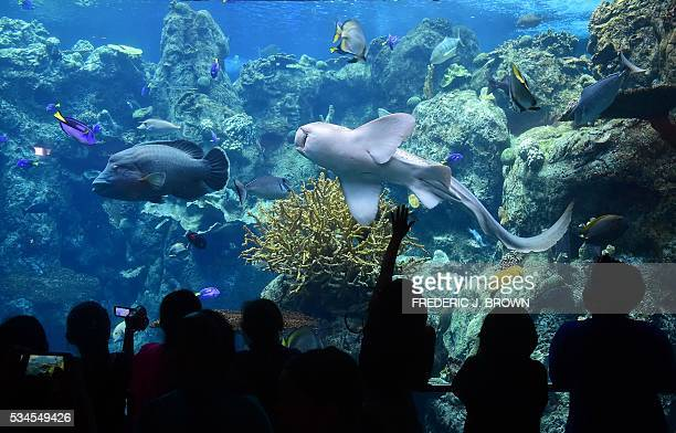 Children react to the sea life in front them at a display called Blue Conner named for the famed diving spot in Palau Micronesia at the Aquarium of...