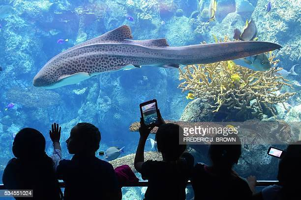 Children react to the sea life in front them at a display called 'Blue Conner' named for the famed diving spot in Palau Micronesia at the Aquarium of...