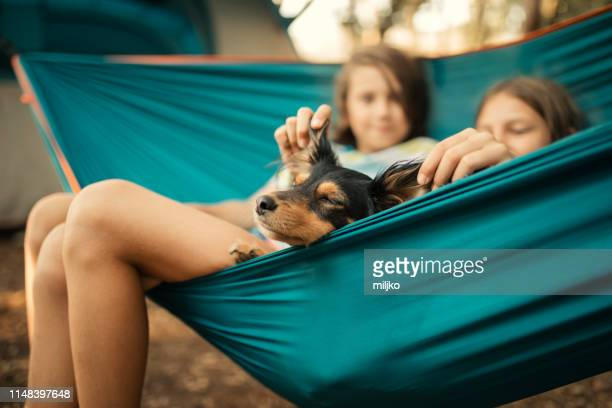 children relaxing in hammock with dog - canine stock pictures, royalty-free photos & images