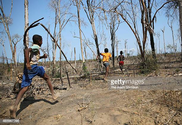 Children run on the burnt field on November 7 2014 in Morondava Madagascar Forest in Madagascar has been decreasing due to population increase and...