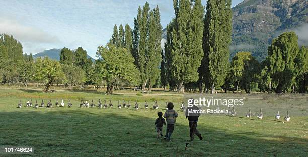 children running ducks - radicella stock pictures, royalty-free photos & images