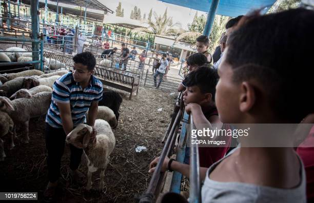 Children seen watching a goat being shown off by a farmer before Eid alAdha in the east of Jabalya refugee camp Eid alAdha is celebrated throughout...