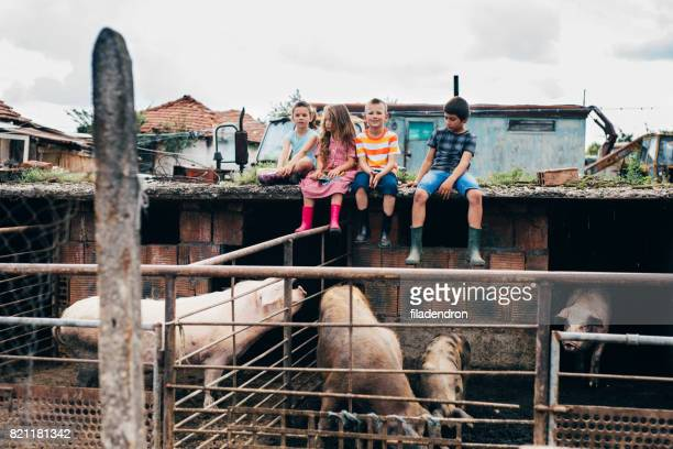children sitting on a roof of a pigsty - bulgaria stock pictures, royalty-free photos & images