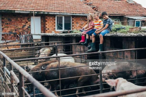 Niños sentados sobre un techo de una pocilga