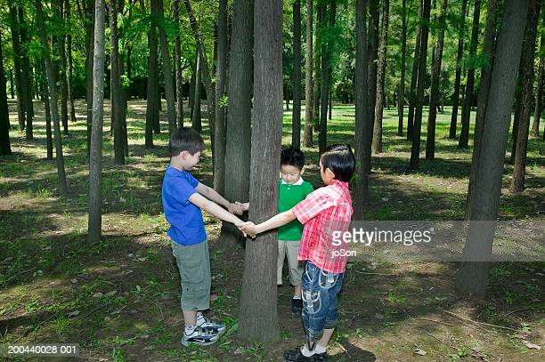 children (6-8) standing around tree in forest and holding hands - 囲む ストックフォトと画像
