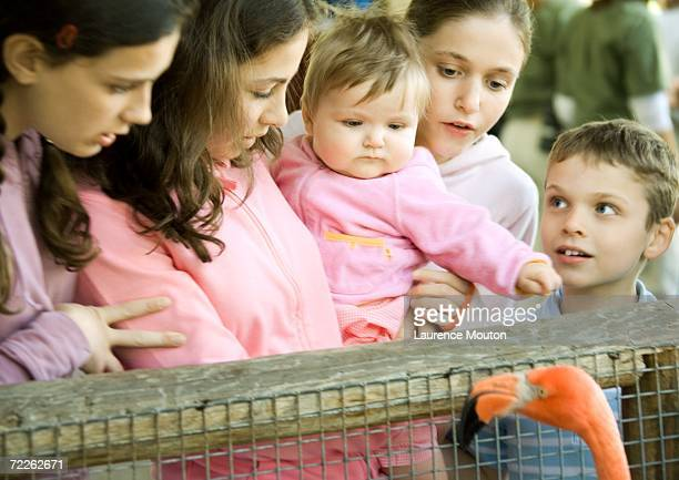 Children standing by railing looking at flamingo in wildlife park