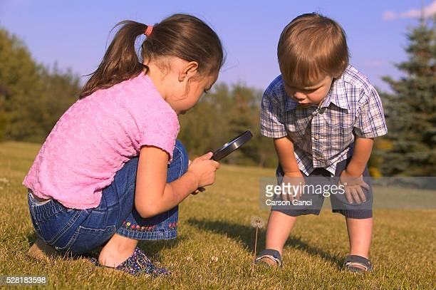 children studying dandelion in field - little girls bent over stock photos and pictures