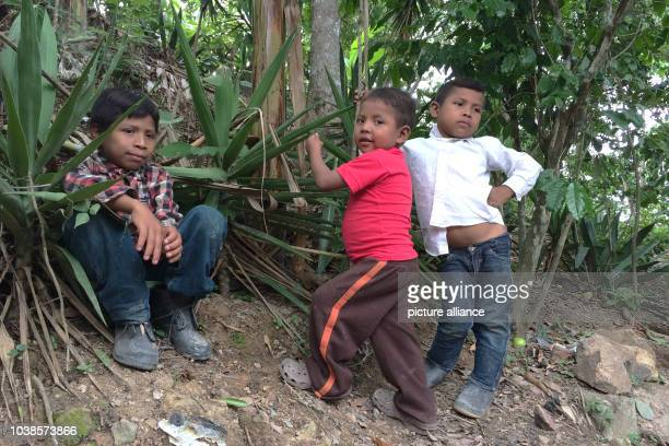 Children that suffer from chronical malnourishment photographed in Tituque Abajo Guatemala 29 June 2016 The village is located in a dry corridor...