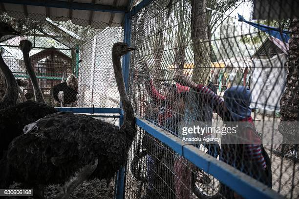 Children try to feed ostriches in a cage at the Zoo in Rafah Gaza on December 26 2016 Gaza's the first and one zoo which was established 17 years ago...