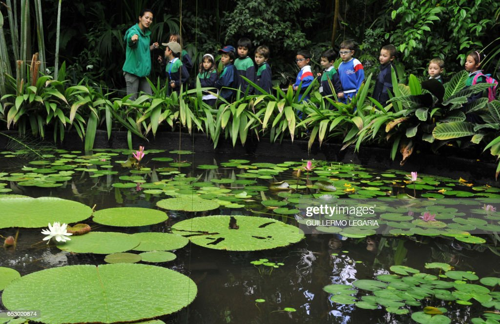 Children visiting the Botanical Garden of Bogota, look at blooming 'Victoria Regias', on November 9, 2009 in the Colombian capital. Natural of the Amazon Jungle, the Victoria Amazonica (scientific name) at the Botanical Garden has bloomed these days after doing it for the last time 14 years ago. AFP PHOTO/Guillermo LEGARIA /