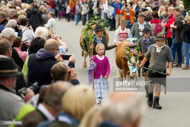 Children walk along with decorated cattle during the traditional driving down of cattle from the mountain pastures inKruen, Germany, 19 September...