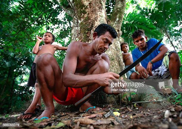 Children watch as Raimundo Nonato shells Brazil nuts with a machete in the Brazilian Amazon community of Boa Frente where the nuts are a source of...