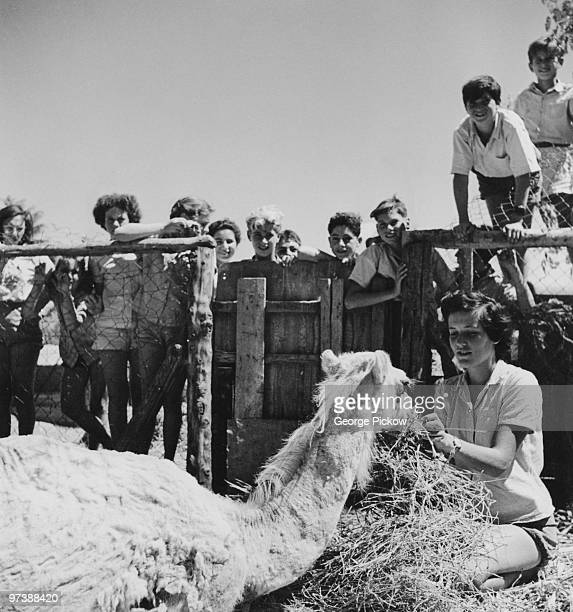 Children watching a pet camel being fed at the Givat Brenner Kibbutz Israel circa 1950