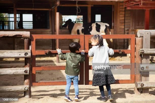 子供動物園で牛を見て - 動物園 ストックフォトと画像