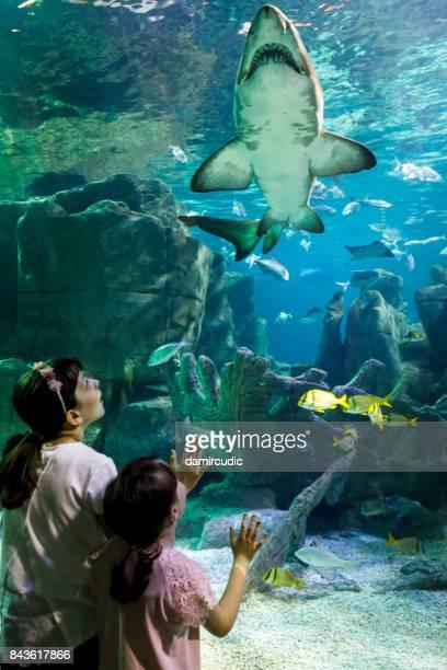 kinder, die gerade riesigen hai in fantasy-unterwasser-aquarium - aquatisches lebewesen stock-fotos und bilder