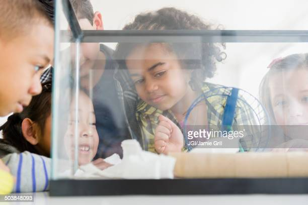 Children watching hamster