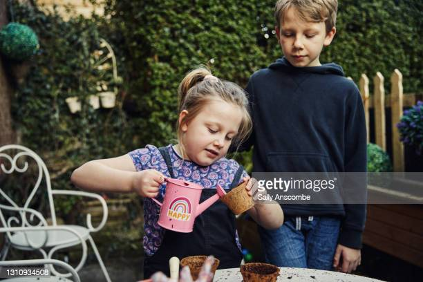 children watering a seeds they have planted - sally anscombe stock pictures, royalty-free photos & images