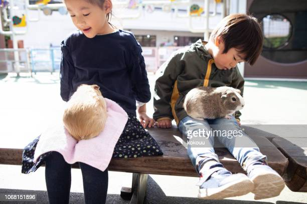 子供たちかわいいハムスター - 動物園 ストックフォトと画像