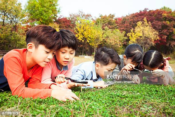 children who have observed the natural - lying on front stock pictures, royalty-free photos & images