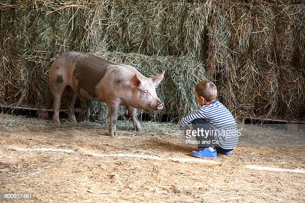 Children with a pig in a farm