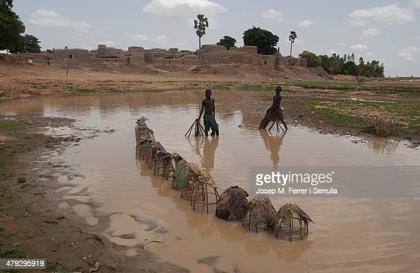 CONTENT] Children with ethnic Bozo fishing with cages in the village of Sirimou just a few kilometers from Djenné