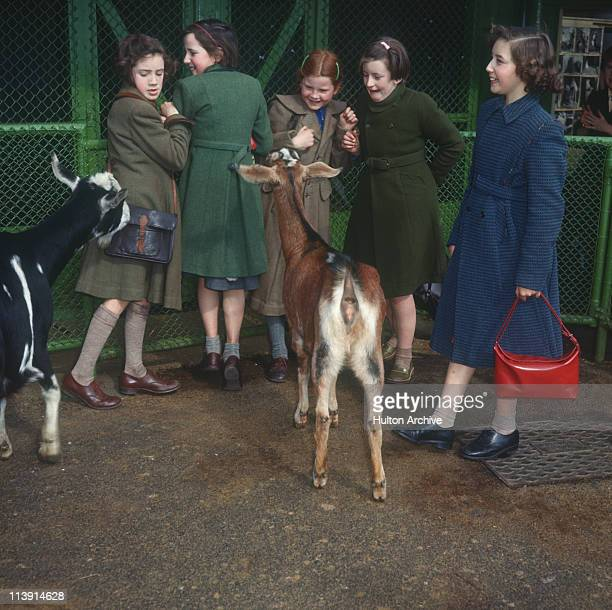 Children with goats at Whipsnade Zoo Bedfordshire circa 1956