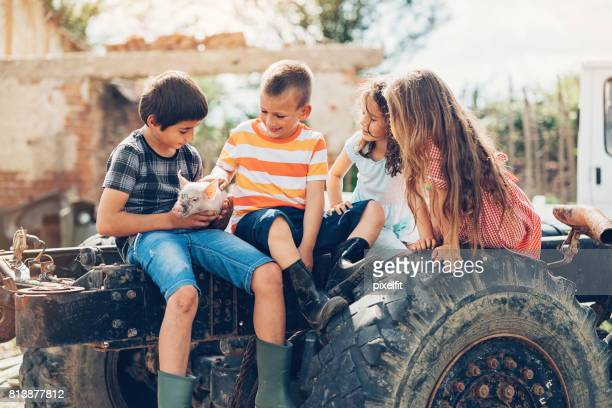 Children with piglet sitting on a tractor