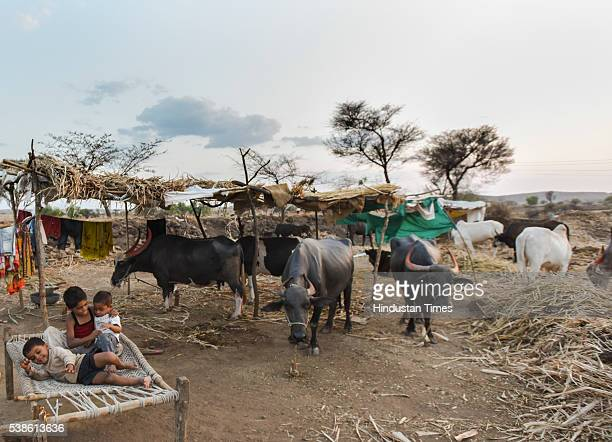 Children with their cattle at the largest cattle camp of the state at Palwan on May 8, 2016 in Beed, India. The camp is operational for more than...