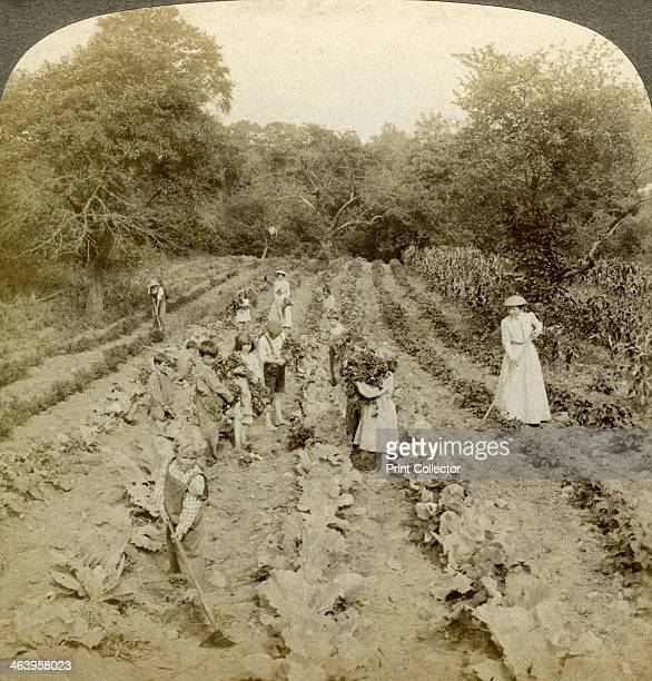 Children working in a vegetable garden Salvation Army Home Spring Valley New York USA Stereoscopic card detail