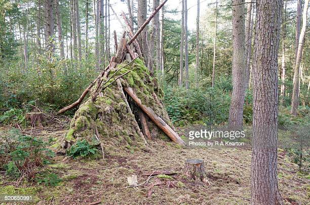 childrens den in the forest - windbreak stock pictures, royalty-free photos & images