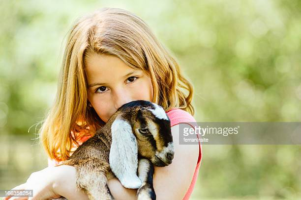 children's farm - livestock stock pictures, royalty-free photos & images