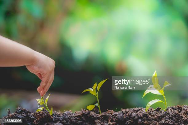 children's hand watering the natural little green plant. ecological concept. - オーガニック ストックフォトと画像