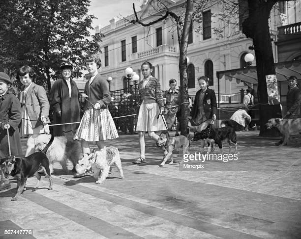 Children's Pet Dog Show at Southport the parade of all shapes and sizes at the show 26th April 1957