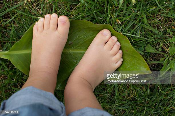 Childs bare feet standing on leaf