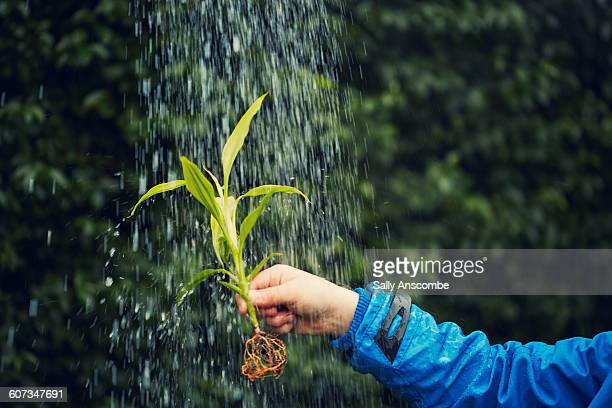 Childs hand holding plant being watered