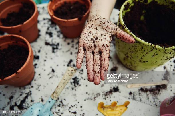 childs hand holding seeds for planting - sally anscombe stock pictures, royalty-free photos & images